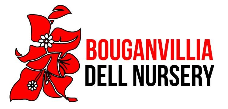 Bouganvillia Dell Nursery